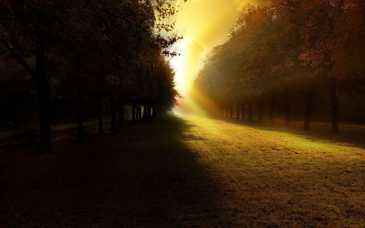 Фото бесплатно утренний парк, восход, солнца - на рабочий стол