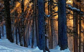 Бесплатные фото деревья,снег,зима,солнце,лучи,мороз,природа