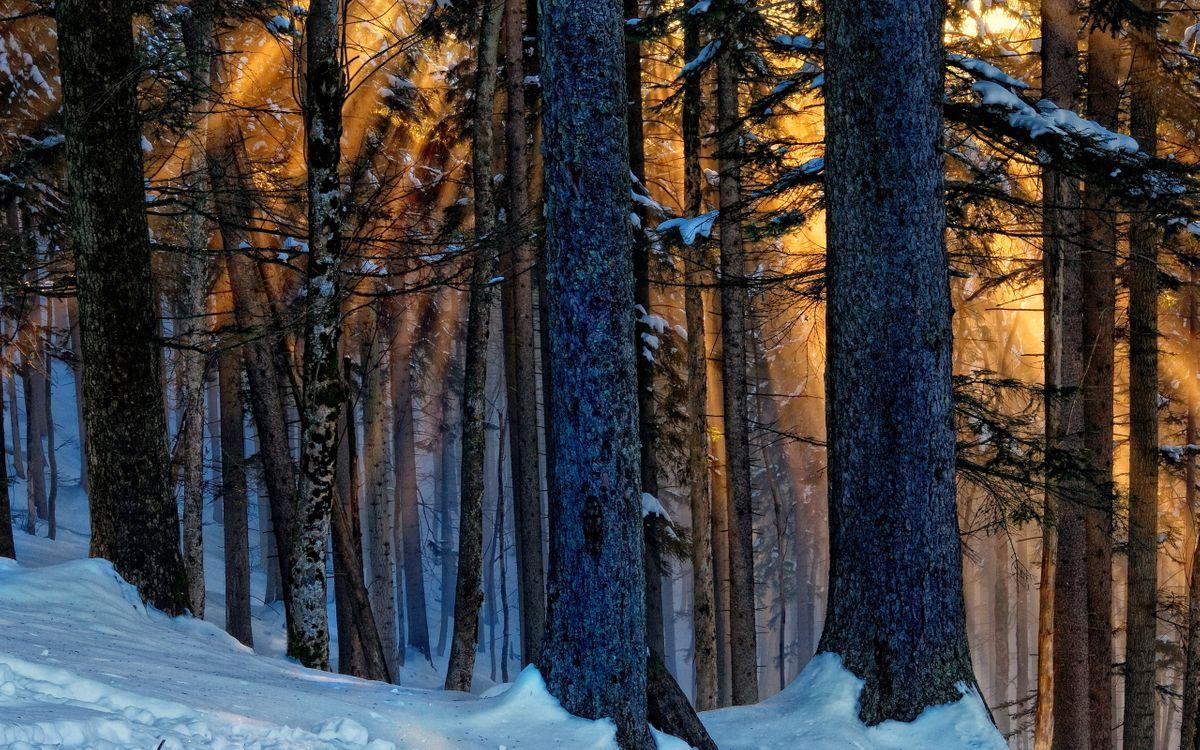 Фото бесплатно мороз, снег, солнце - на рабочий стол