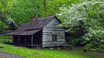 Фото бесплатно дом, деревья, трава, зелень, лес, окно, пейзажи