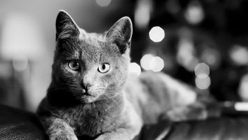 Заставки фото, черно-белая, кошка