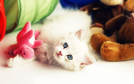Заставки котенок, белый, пушистый