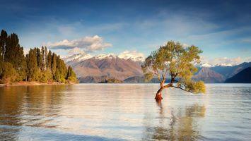 Фото бесплатно горы, листья, снег
