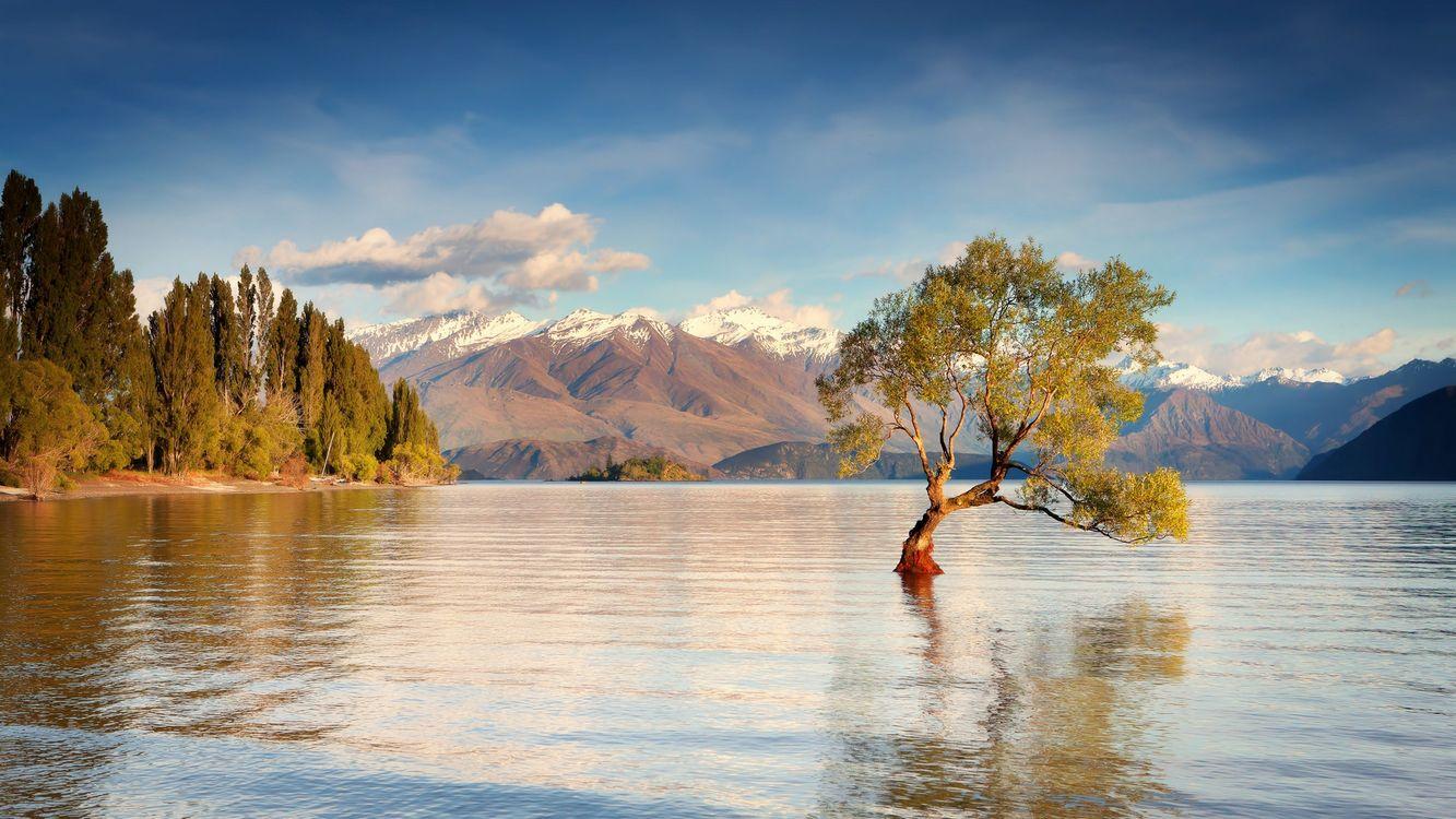 Фото бесплатно горы, листья, снег - на рабочий стол