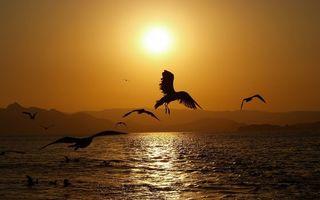 Фото бесплатно птицы, море, закат