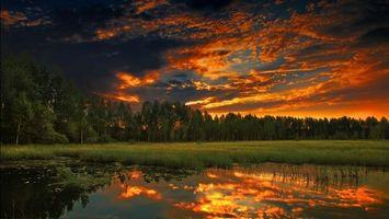 Бесплатные фото река,болото,пруд,камыши,трава,лес,деревья