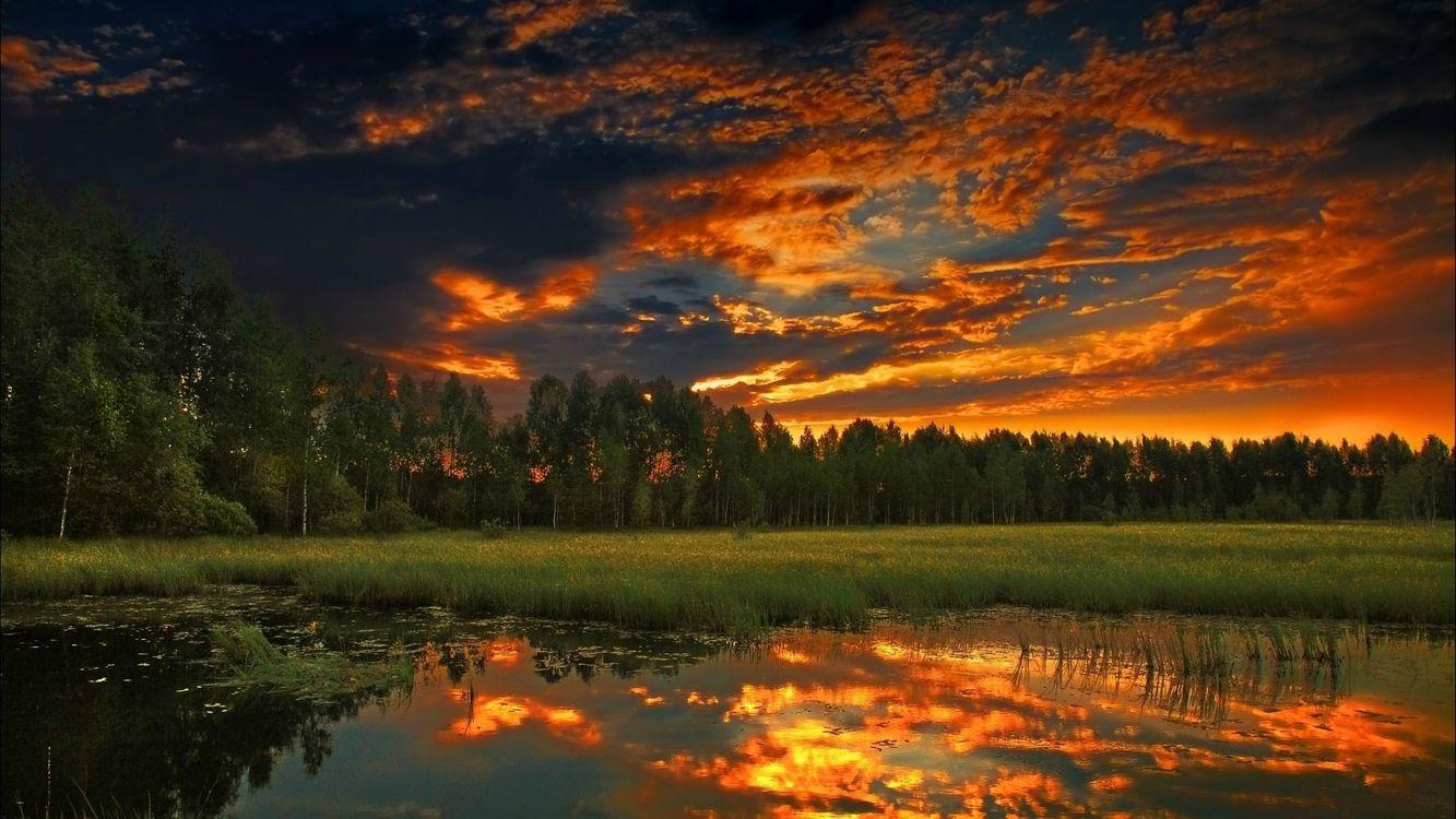 Фото бесплатно река, болото, пруд, камыши, трава, лес, деревья, небо, тучи, облака, закат, пейзажи, пейзажи