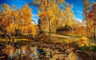 Бесплатные фото река,деревья,березы,листья,вода,дорога,дом
