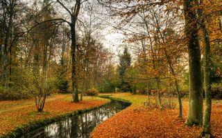 Бесплатные фото ручей,осень,деревья,лес,листопад,природа