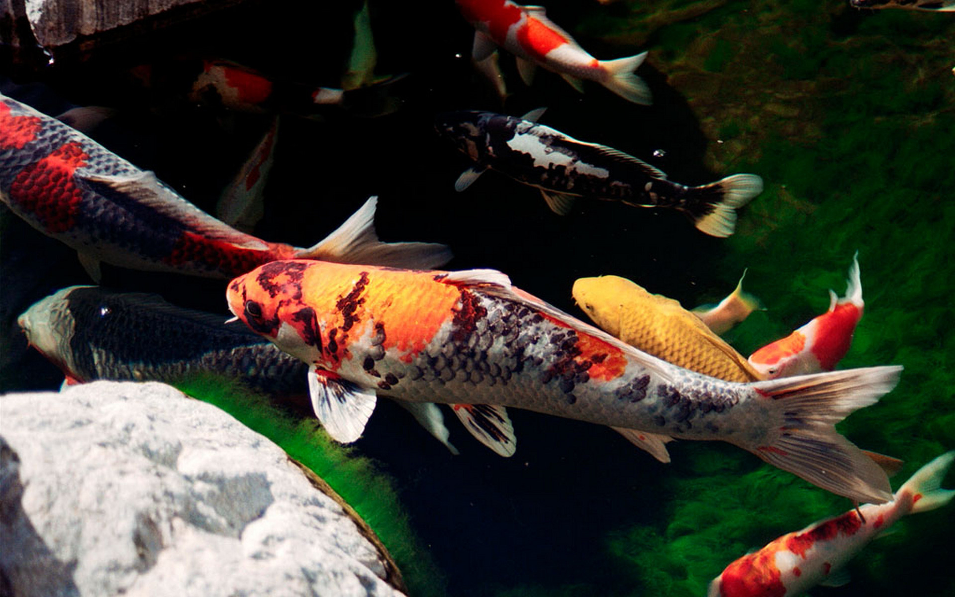 рыбка, чешуя, плавники