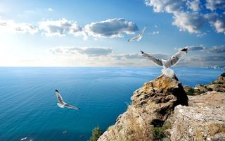 Бесплатные фото скала,камни,чайки,полет,море,небо,пейзажи