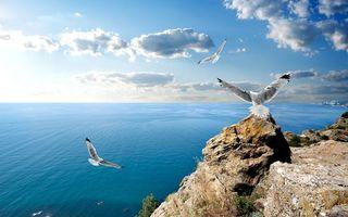 Фото бесплатно скала, камни, чайки