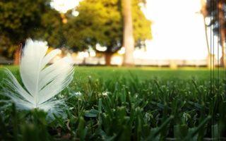 трава, зеленая, газон, перо, белое
