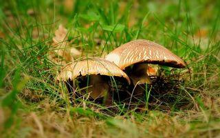 Бесплатные фото трава,лес,осень,плоды,шляпка,ножка,коричневый