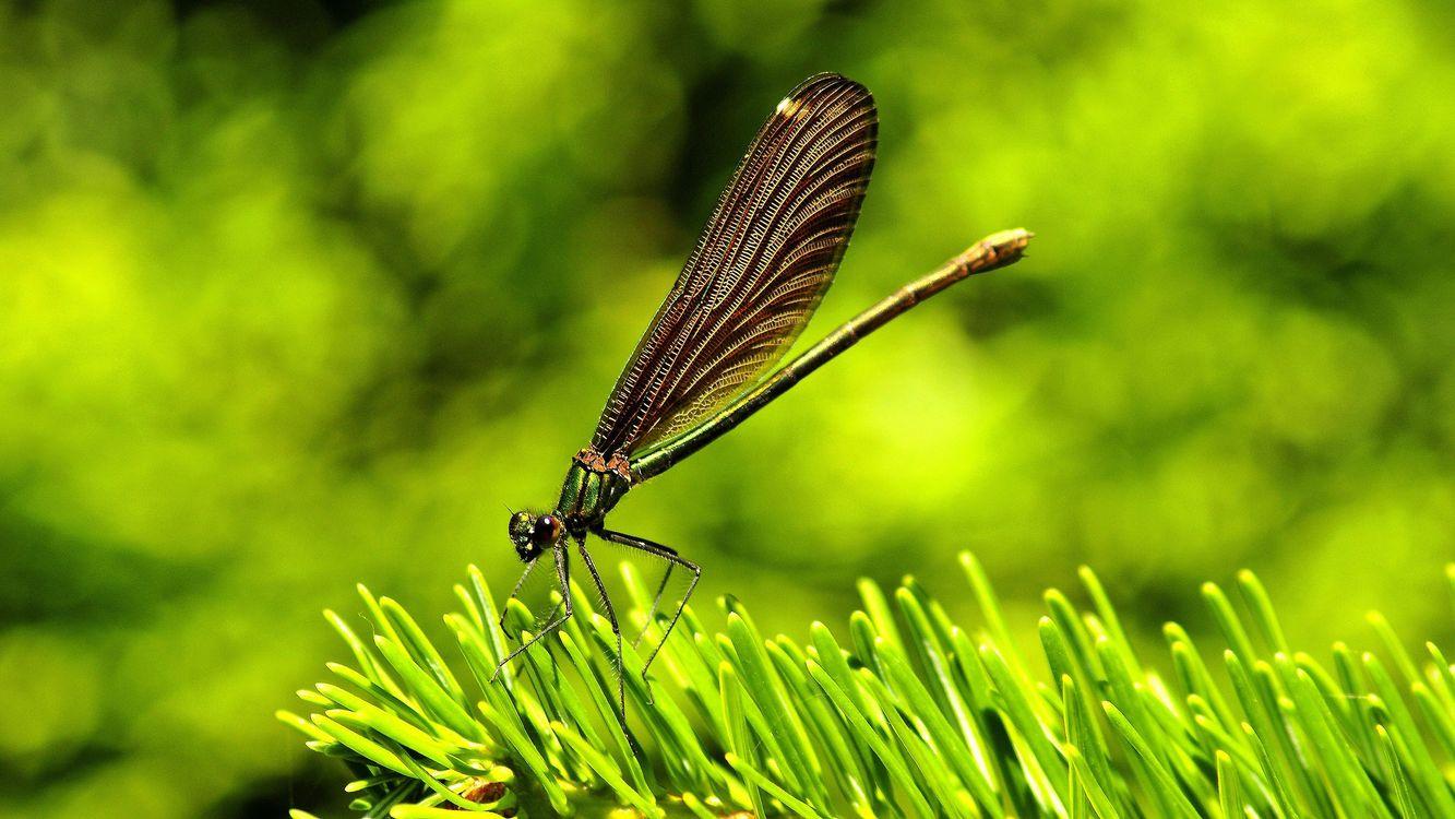 Фото трава зелень насекомое - бесплатные картинки на Fonwall