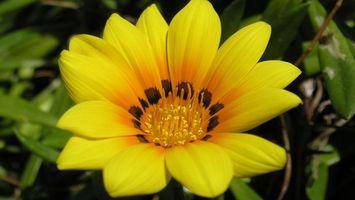 Бесплатные фото цветок,желтый,лепестки,аромат,сердцевинка,листья,клумба