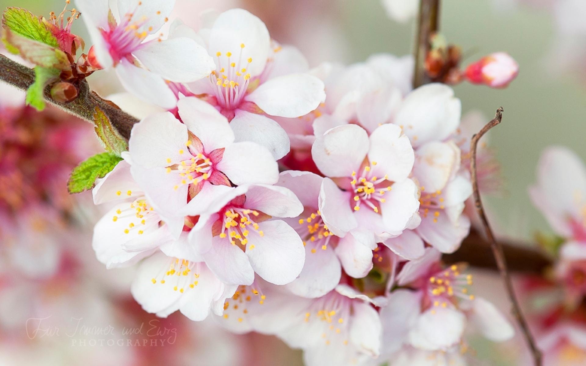 весна фото обои для мобильника это актуально