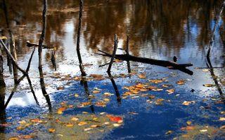 Фото бесплатно вода, коряги, листва