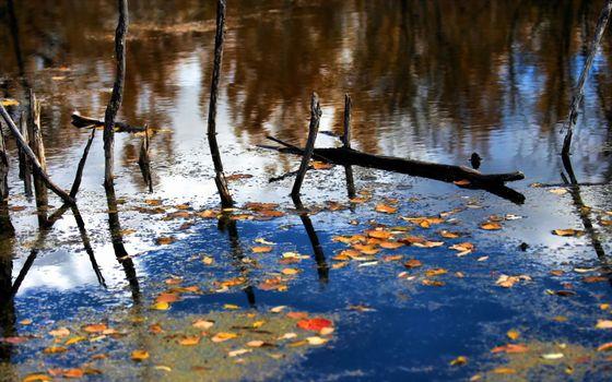 Фото бесплатно вода, коряги, листва, желтая, отражение, небо, природа