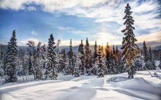 Фото бесплатно зимний лес, солнце на закате, снежные деревья