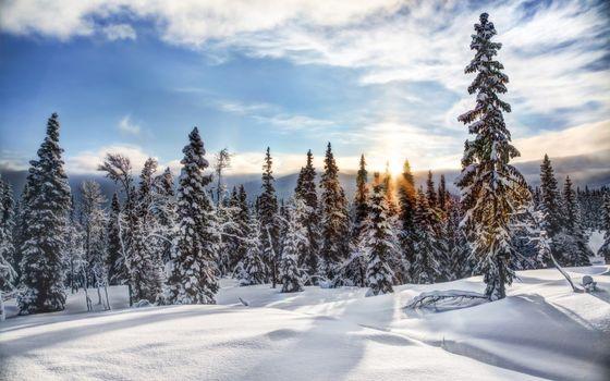 Фото бесплатно зимний лес, солнце на закате, снежные деревья, снег, зима, природа