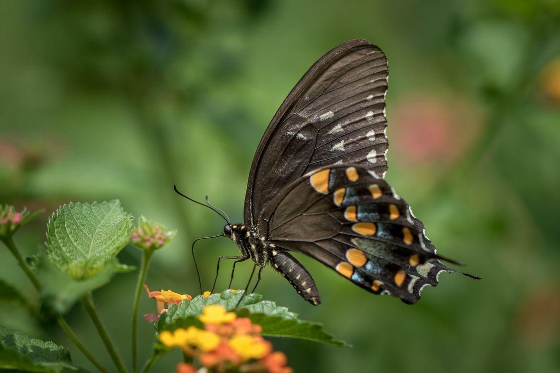 Обои бабочка, цветок, цветы, флора, макро на телефон | картинки насекомые