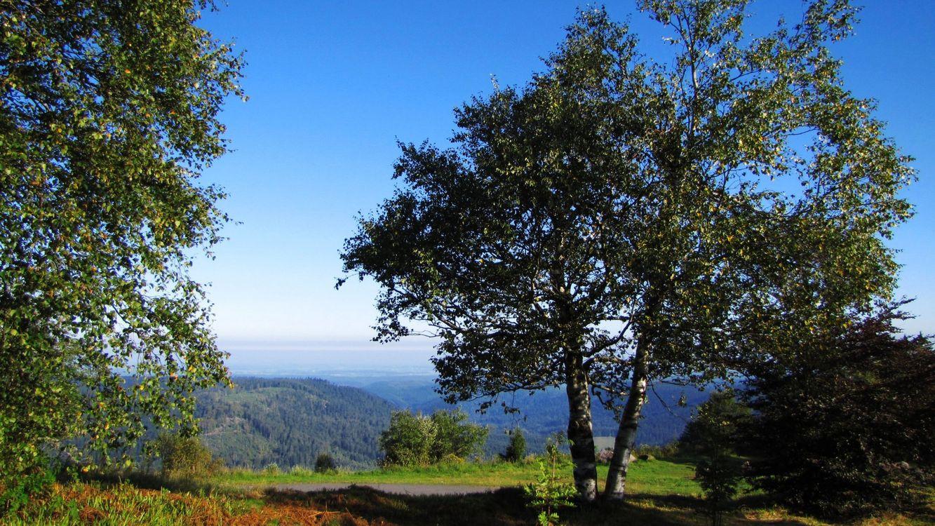 Фото бесплатно деревья, дорога, пейзаж - на рабочий стол