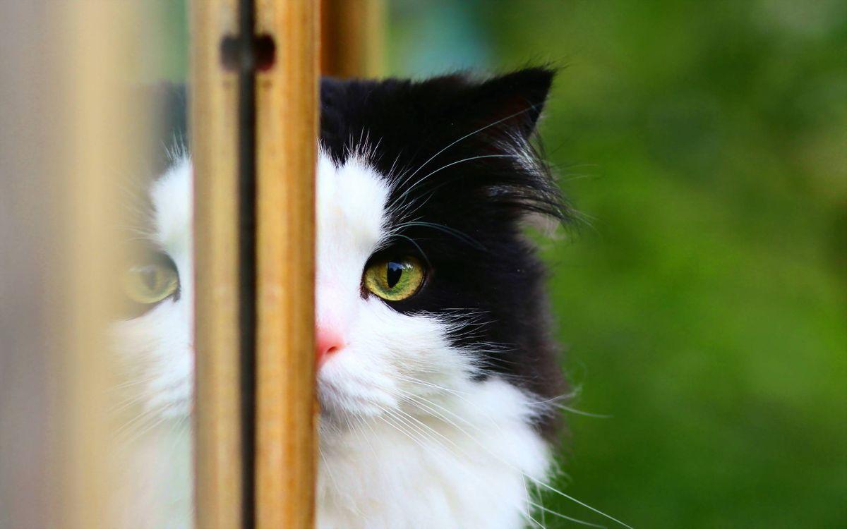 Фото бесплатно кот, пушистый, морда, глаз зеленый, шерсть, кошки