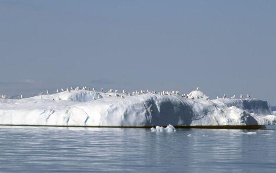 Фото бесплатно айсберг, белый, льдины