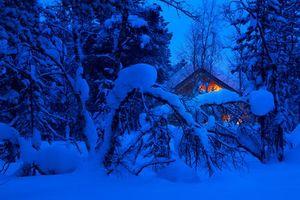 Бесплатные фото зима,лес,ночь,деревья,сугробы,домик,пейзаж