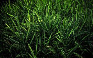 Фото бесплатно лето, трава, зеленая