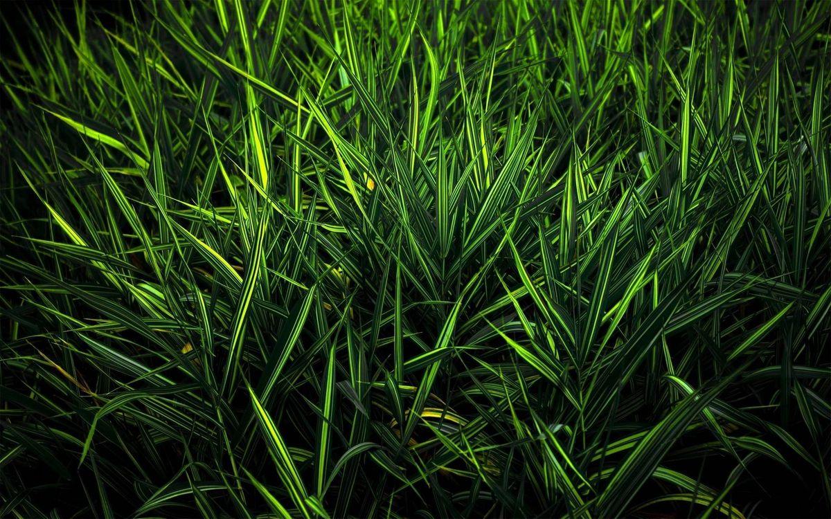 Фото бесплатно лето, трава, зеленая, стебли, природа