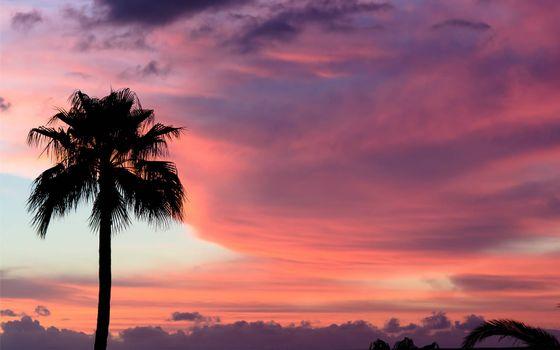 Бесплатные фото пальма,небо,вечер