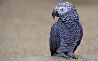 Фото бесплатно попугай, глаза, клюв, перья, крылья, лапы