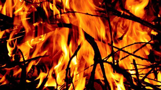 Photo free bonfire, branches, fire