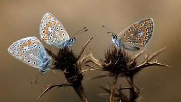 Photo free antennae, butterflies, plant