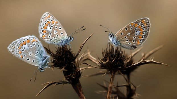 Photo free antennae, butterflies, plant