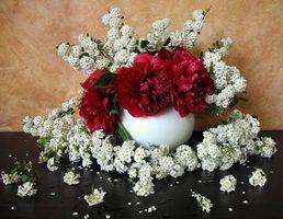Заставки цветы, ваза, натюрморт