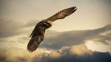 Бесплатные фото орел,клюв,крылья,перья,полет,облака