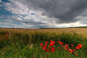 Фото бесплатно поле, закат, колосья