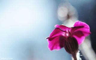 Бесплатные фото цветок, лес, природа, поляна