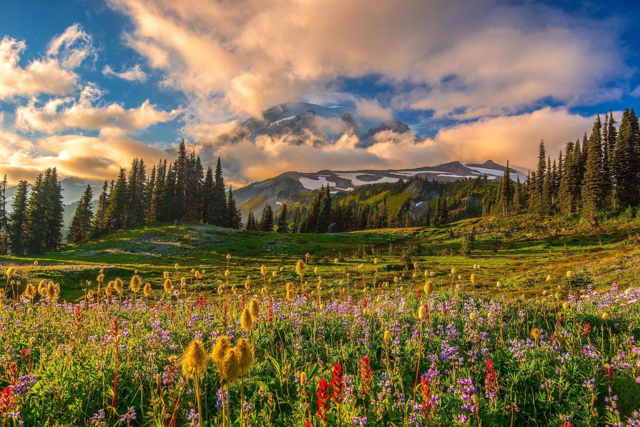 горы, ели, цветочная поляна  № 3587000 без смс