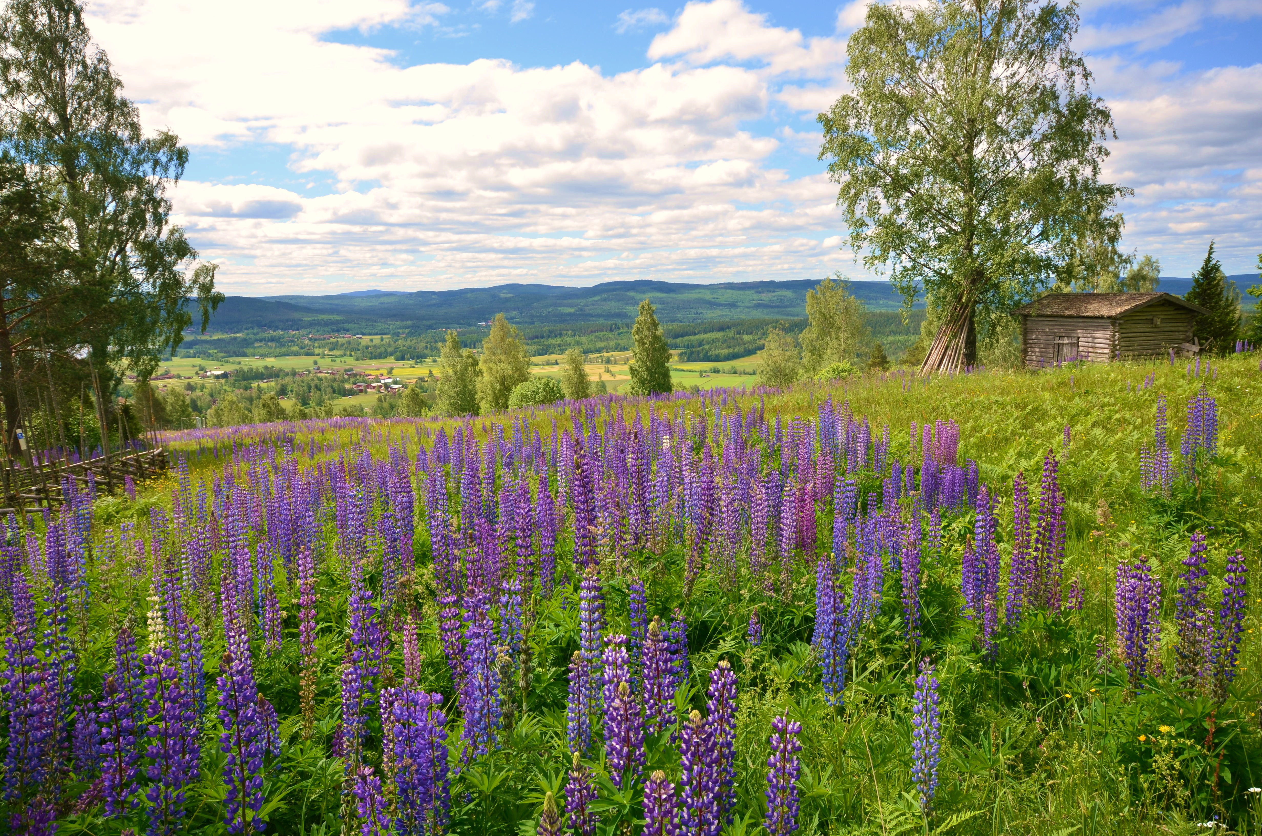 обои Даларна, Швеция, горы, холмы картинки фото