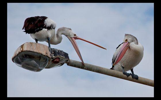 Фото бесплатно фонарь, птицы, черно-белые