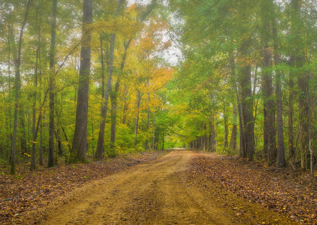 Фото бесплатно осень, лес, деревья, дорога, туман, природа, пейзажи