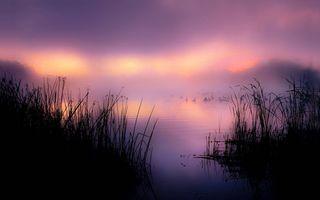 Фото бесплатно растительность, озеро, лебеди