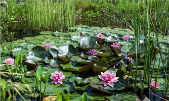 Photo free pond, plants, water lilies