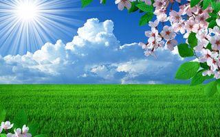 Фото бесплатно поле, ветки, цветы