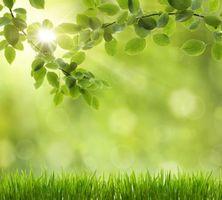 Бесплатные фото ветки деревьев, трава, макро
