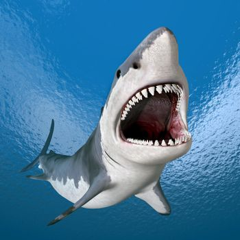 Free screensaver danger shark